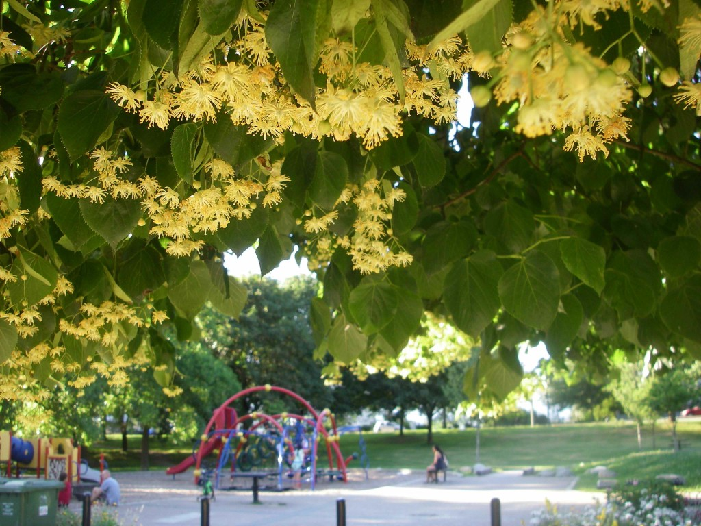 linden-tree-playground